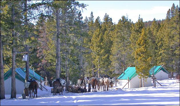 Elk Camp in Snow