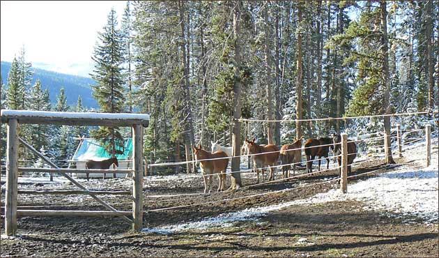 Elk Camp Corral